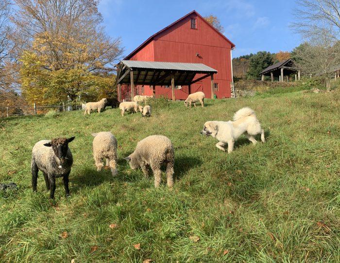 Hebron Hills Farm