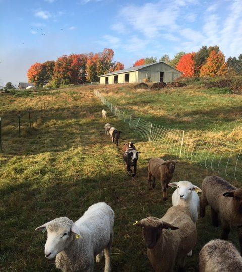 Elihu Farm
