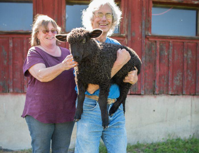 Foster Sheep Farm