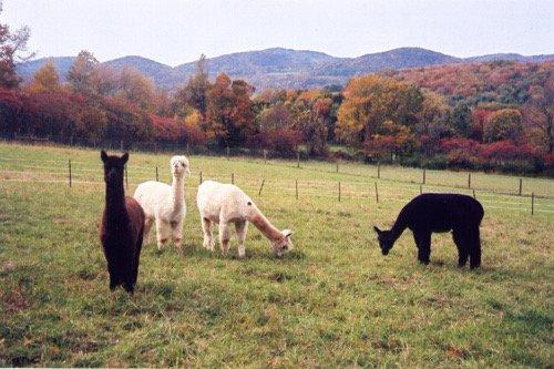 Haven Hill Farm
